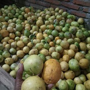 Jeruk Lemon Organik
